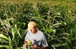 E-verigy contra granjeros