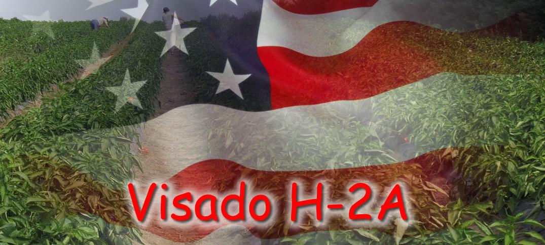 Visas H-2A para Trabajadores Agricultores Temporales en Estados Unidos